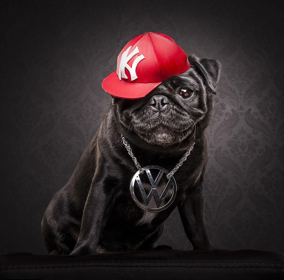 The Pug Life 1