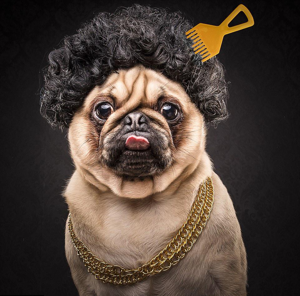 The Pug Life 2