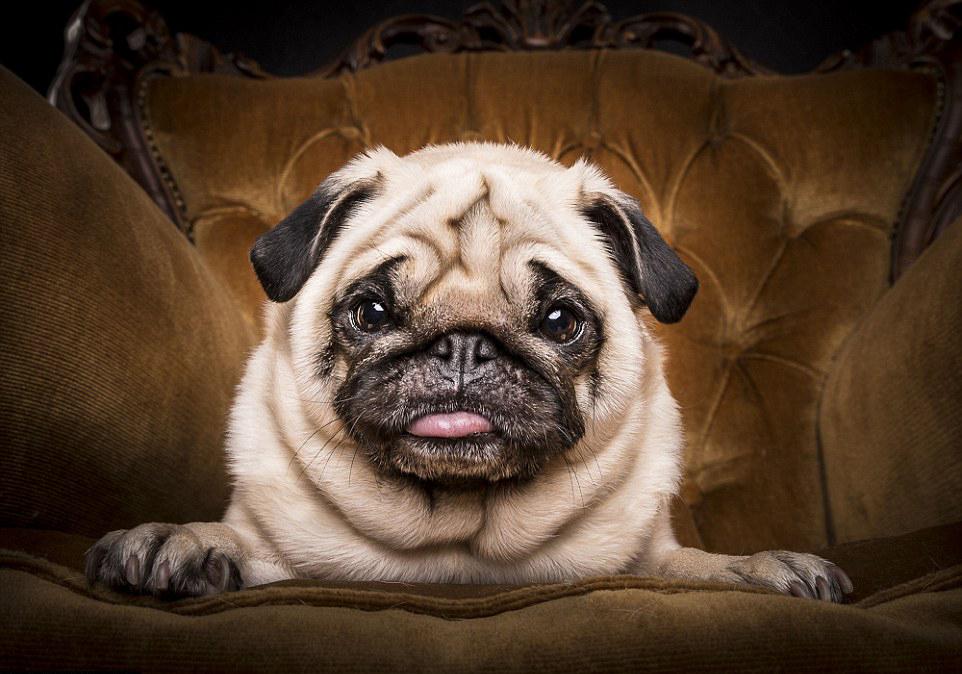The Pug Life 5