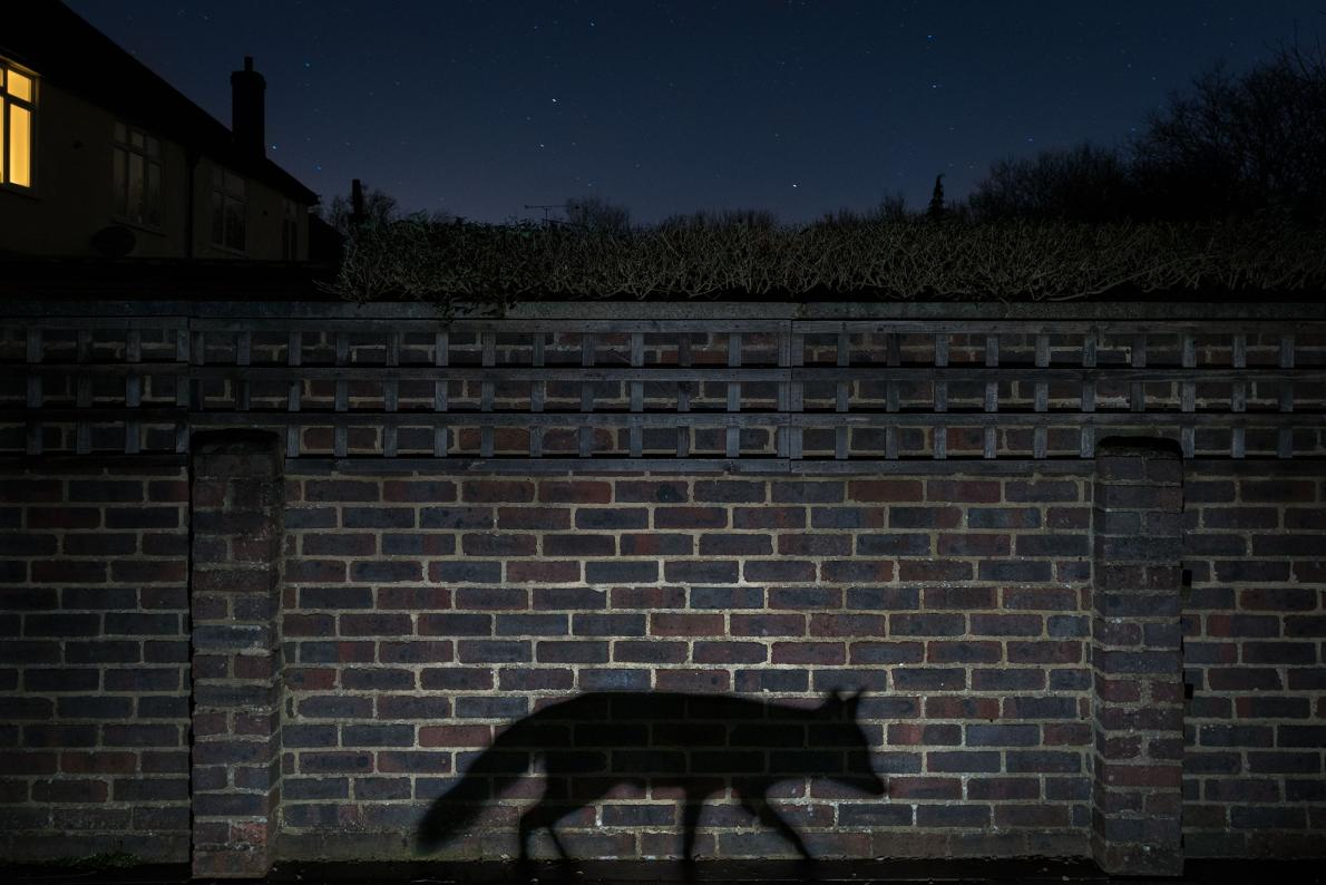 Wildlife Photographer of the Year 2015 Urban