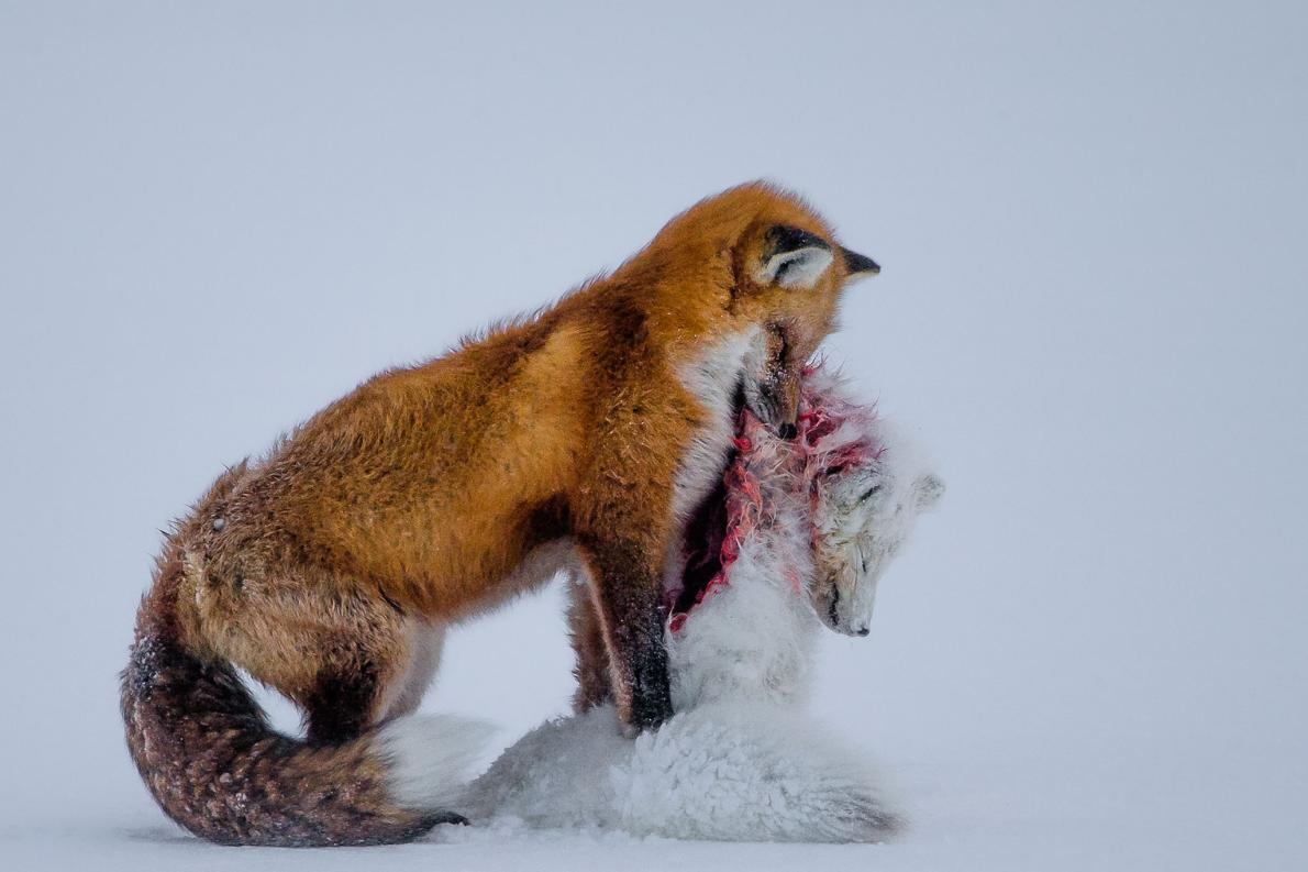 Wildlife Photographer of the Year 2015 Winner