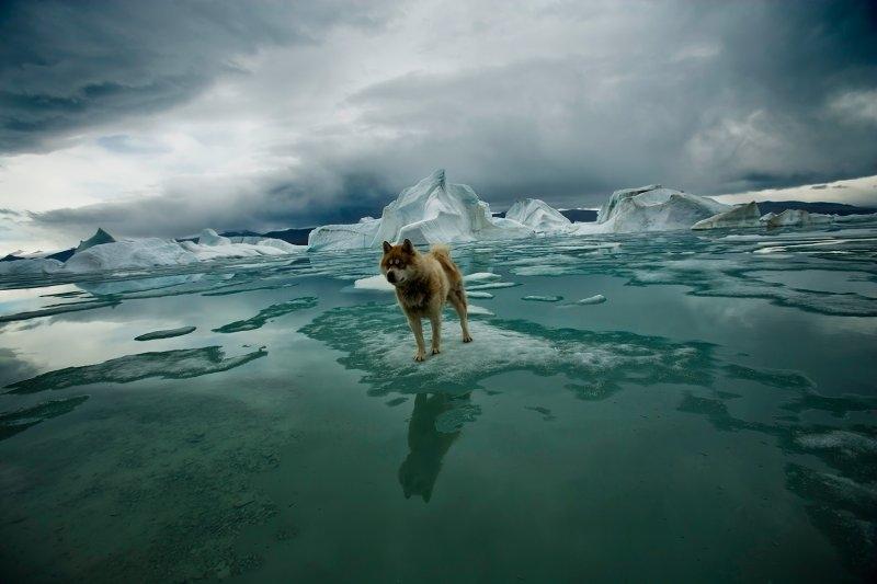 Sebastian Copeland Arctic 2
